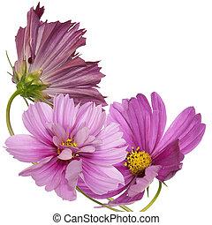 ozdobný, zahrada, květiny