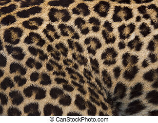 ozelot, leopard, jaguar, struktur, skinn