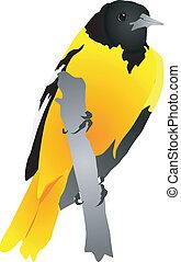 pájaro amarillo, sentado, en un rama