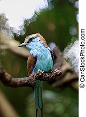 pájaro azul, mirar, al lado de
