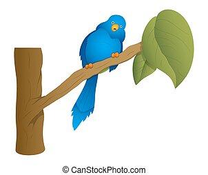 pájaro azul, rama, sentado