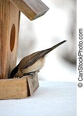 pájaro, birdhouse