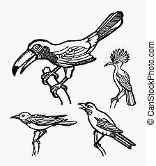 pájaro, bosquejo, 2
