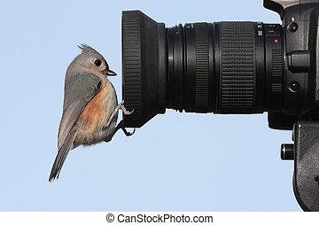 pájaro, cámara