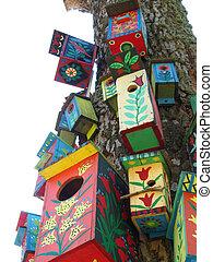 pájaro, cajas, coloreado