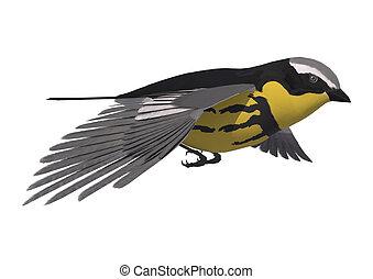 pájaro cantor, curruca