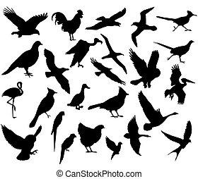 pájaro del vuelo