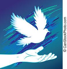 pájaro, dove., imagen, paloma, mano