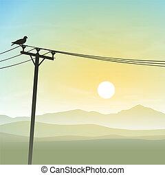pájaro, en, líneas telefónicas