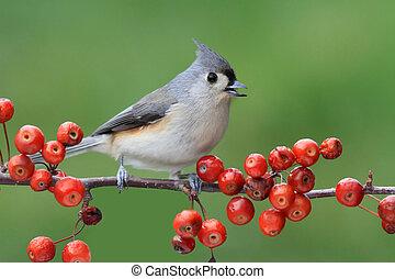pájaro, en, un, percha, con, cerezas
