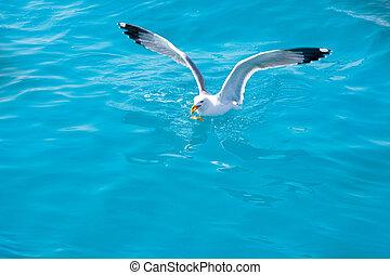 pájaro, gaviota, en, agua de mar, en, océano