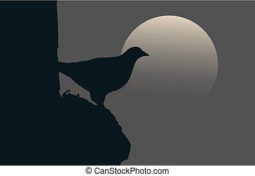 pájaro, noche