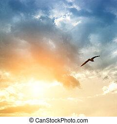 pájaro, nubes, dramático