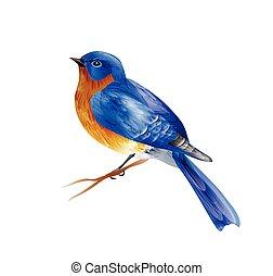 pájaro, primavera, vector