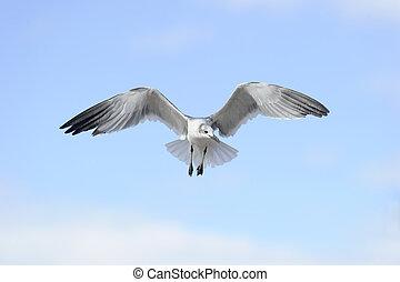 pájaro que vuela