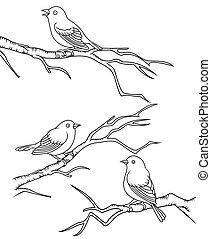pájaro, rama, sentado