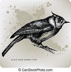 pájaro, sentado, en un rama, mano, empate