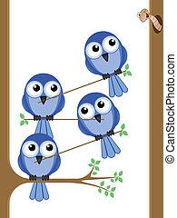 pájaro, trabajo en equipo