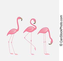 pájaro tropical, flamencos