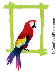 pájaro tropical, marco