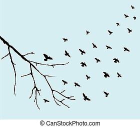 pájaros que vuelan