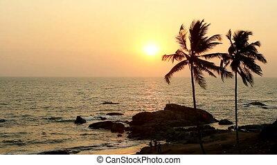 pálma fa, árnykép, -ban, napnyugta