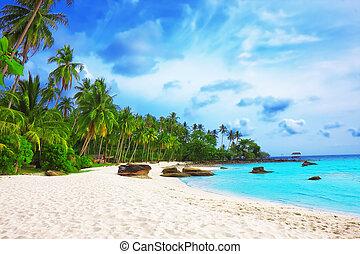 pálma fa, alatt, tropikus, teljes, tengerpart