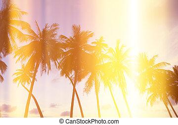 pálma fa, képben látható, tropikus, tengerpart