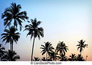 pálma fa, napnyugta, arany-, kék ég, backlight, alatt, tengertől távol eső
