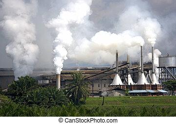 pálma, gyár, olaj