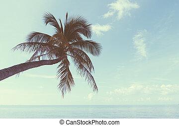 pálma, képben látható, tropikus, tengerpart