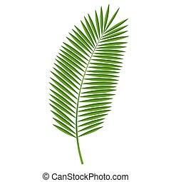 pálma, vektor, levél növényen, ábra