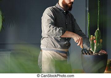 pálmaház, munka, munka, közben, illeszt, profi, kaktusz, kertész