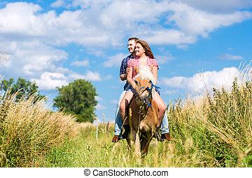 párosít, lovaglás, képben látható, ló, alatt, nyár, kaszáló