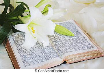 páscoa, bíblia, lírio