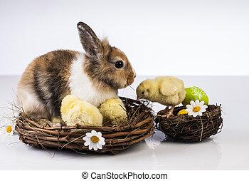 páscoa, coelhinho, coelho, galinha