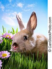 páscoa, coelho bebê, ligado, grama verde