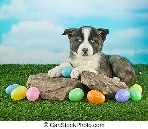 páscoa, filhote cachorro