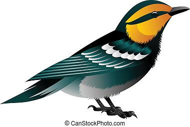 pássaro, amarelo encabeçou