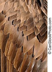 pássaro, asas