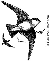 pássaro, brown-throated, areia, martin