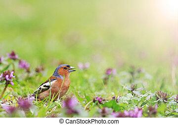 pássaro, de, mola brilhante floresce, com, ensolarado, hotspot