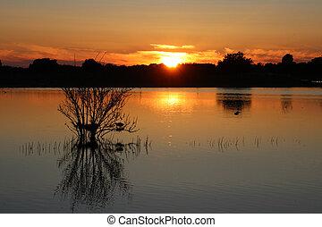 pássaro, faz, um, ninho, em, a, pôr do sol