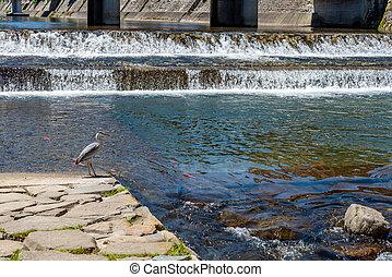 pássaro, ficar, perto, um, rio