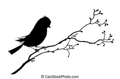 pássaro, fundo, silueta, branca