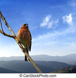 pássaro, ligado, a, ramo