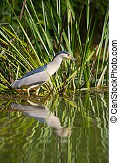pássaro, pesca, em, a, lago
