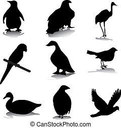pássaro, silhuetas
