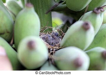 pássaros bebê, em, um, nest.