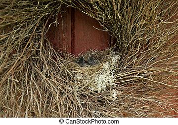 pássaros bebê, em, um, ninho